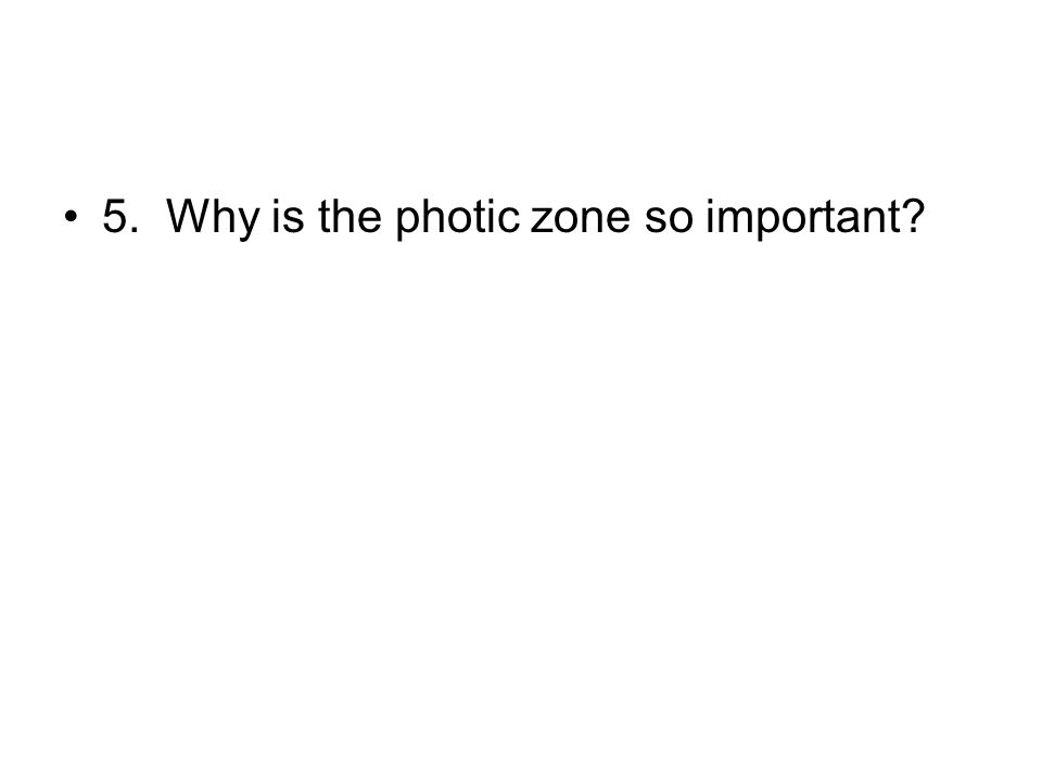 5. Why is the photic zone so important