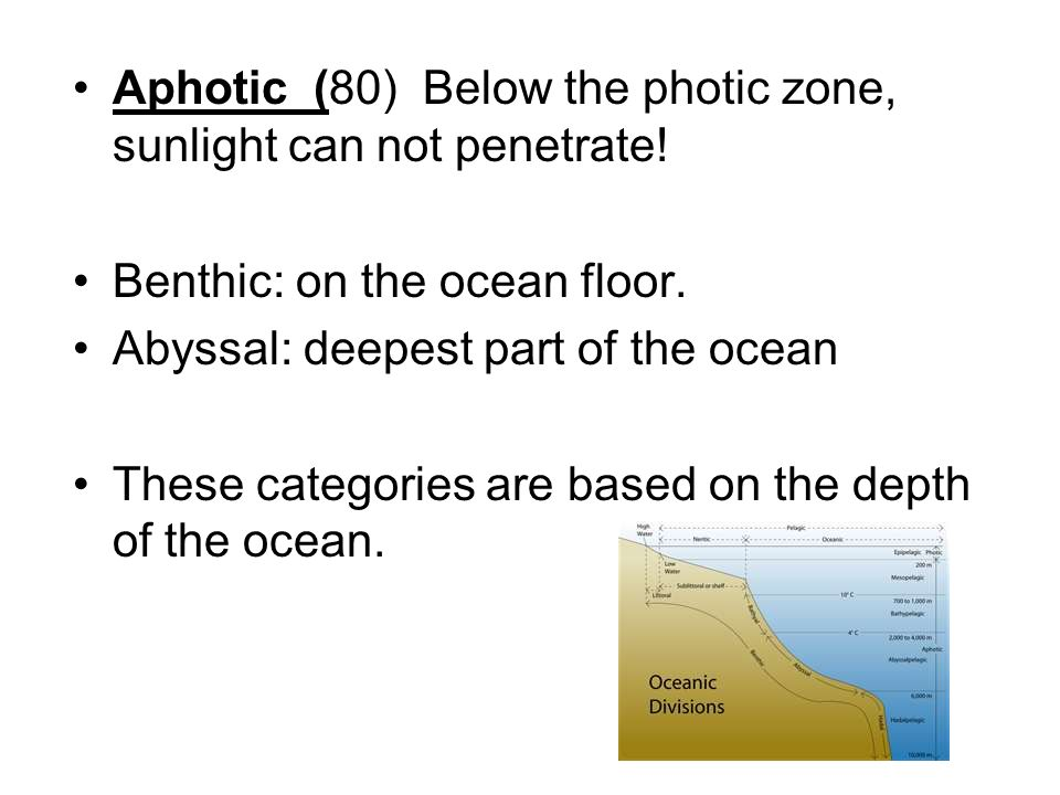 Aphotic (80) Below the photic zone, sunlight can not penetrate!