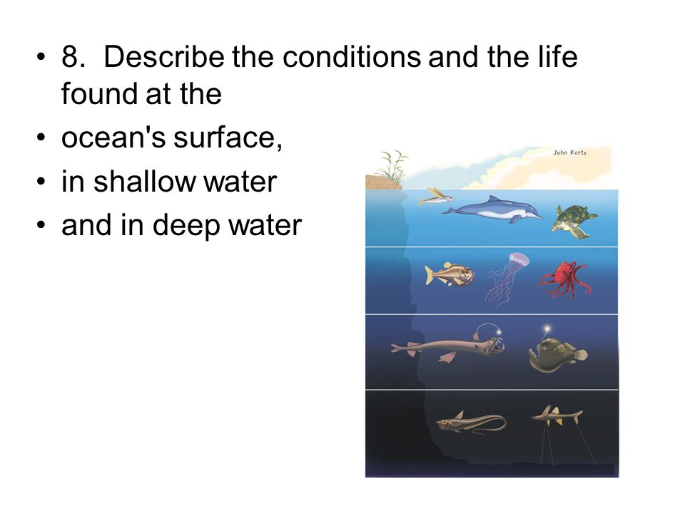 8. Describe the conditions and the life found at the