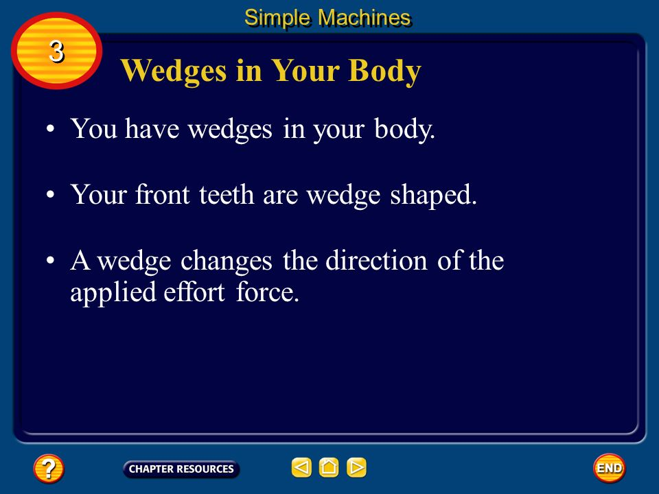 Wedges in Your Body 3 You have wedges in your body.