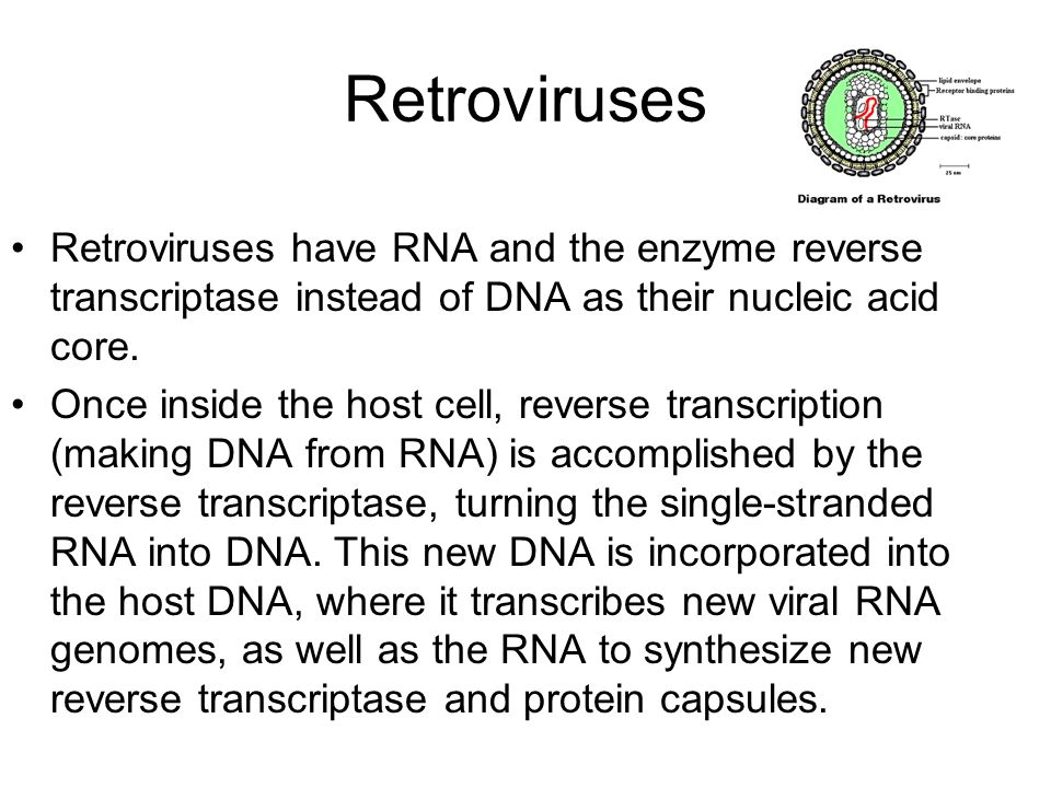 Retroviruses Retroviruses have RNA and the enzyme reverse transcriptase instead of DNA as their nucleic acid core.