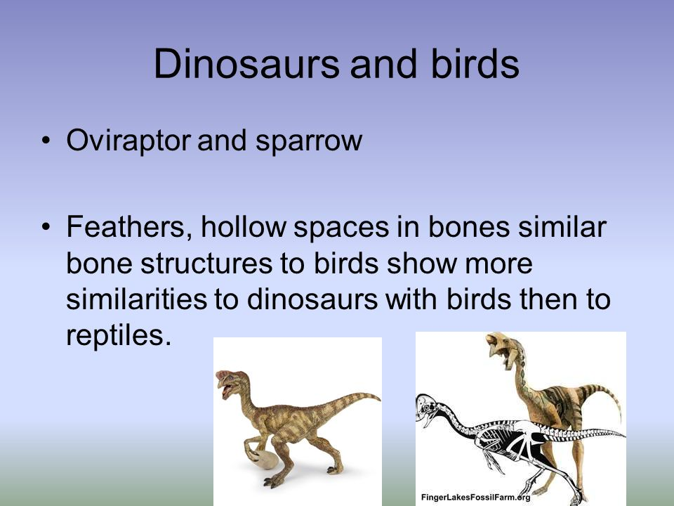 Dinosaurs and birds Oviraptor and sparrow