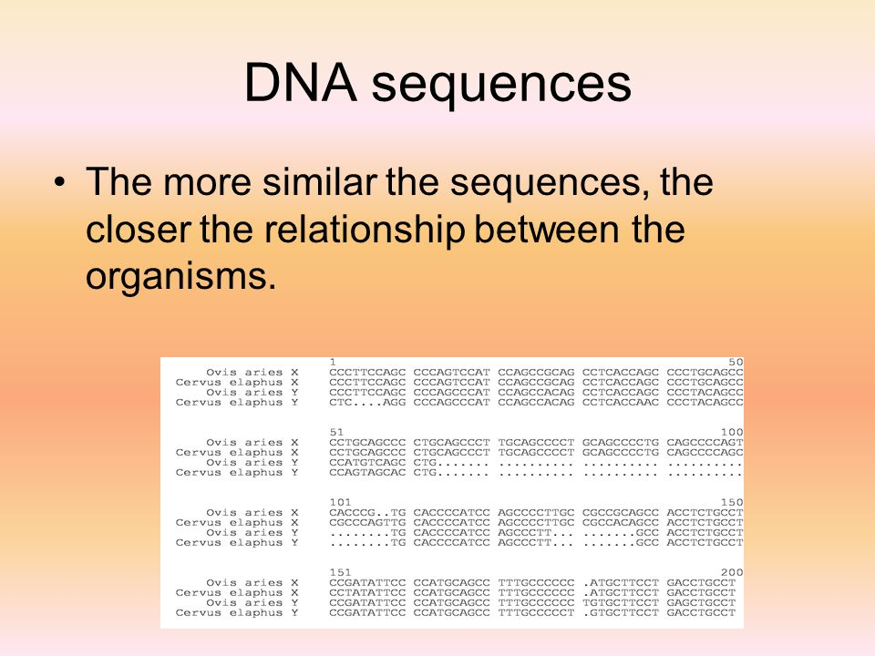 DNA sequences The more similar the sequences, the closer the relationship between the organisms.