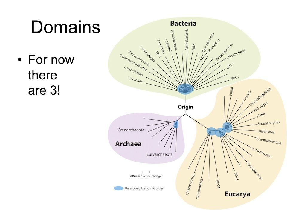 Domains For now there are 3!