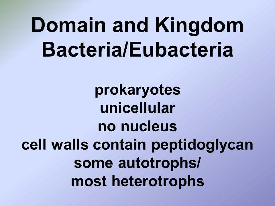Domain and Kingdom Bacteria/Eubacteria prokaryotes unicellular no nucleus cell walls contain peptidoglycan some autotrophs/ most heterotrophs