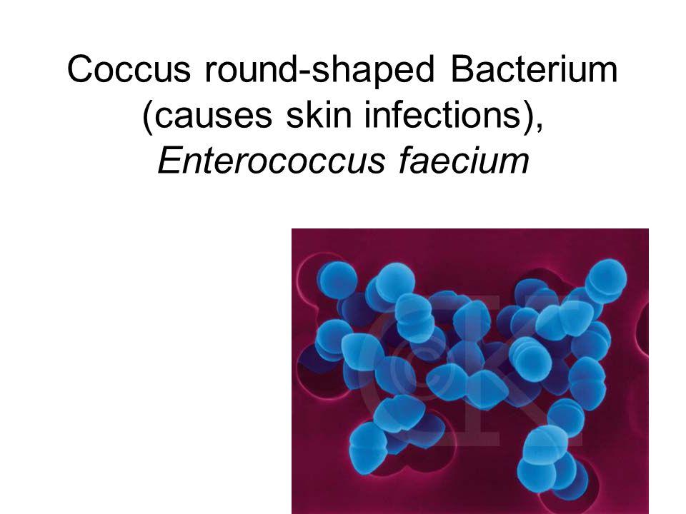 Coccus round-shaped Bacterium (causes skin infections), Enterococcus faecium