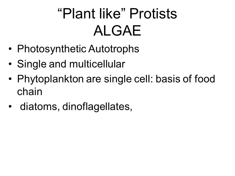 Plant like Protists ALGAE