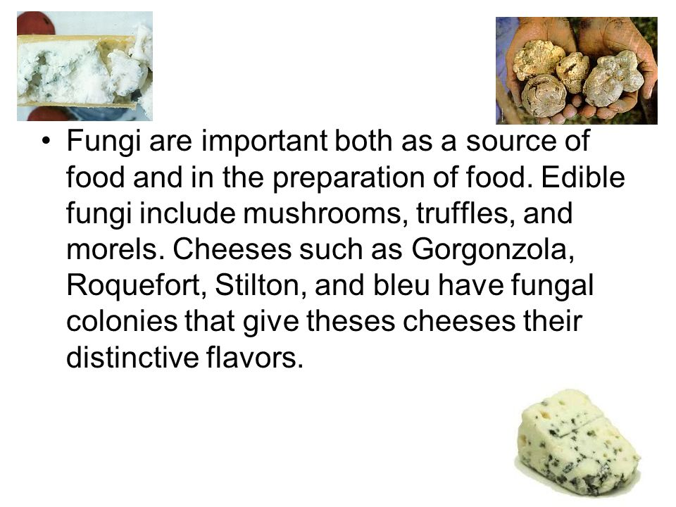 Fungi are important both as a source of food and in the preparation of food.