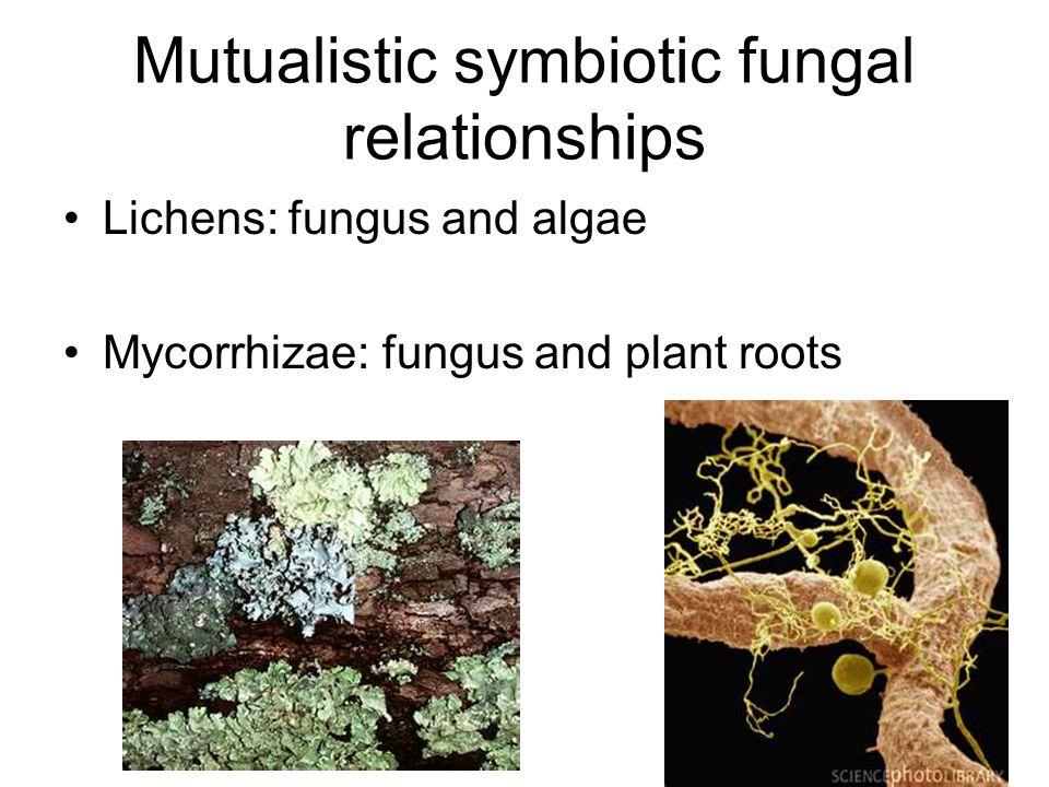Mutualistic symbiotic fungal relationships