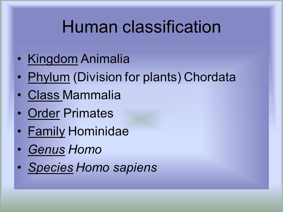 Human classification Kingdom Animalia