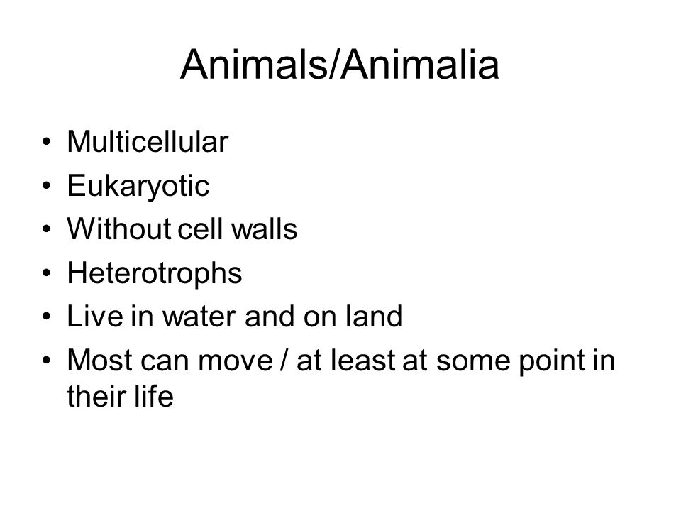 Animals/Animalia Multicellular Eukaryotic Without cell walls