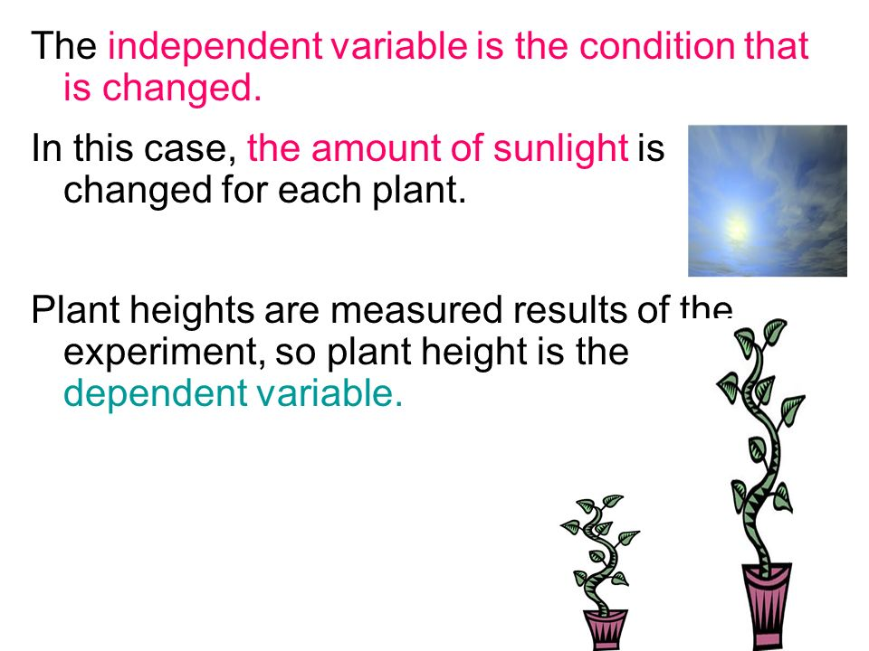 The independent variable is the condition that is changed.