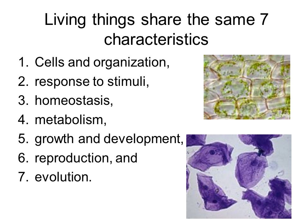 Living things share the same 7 characteristics