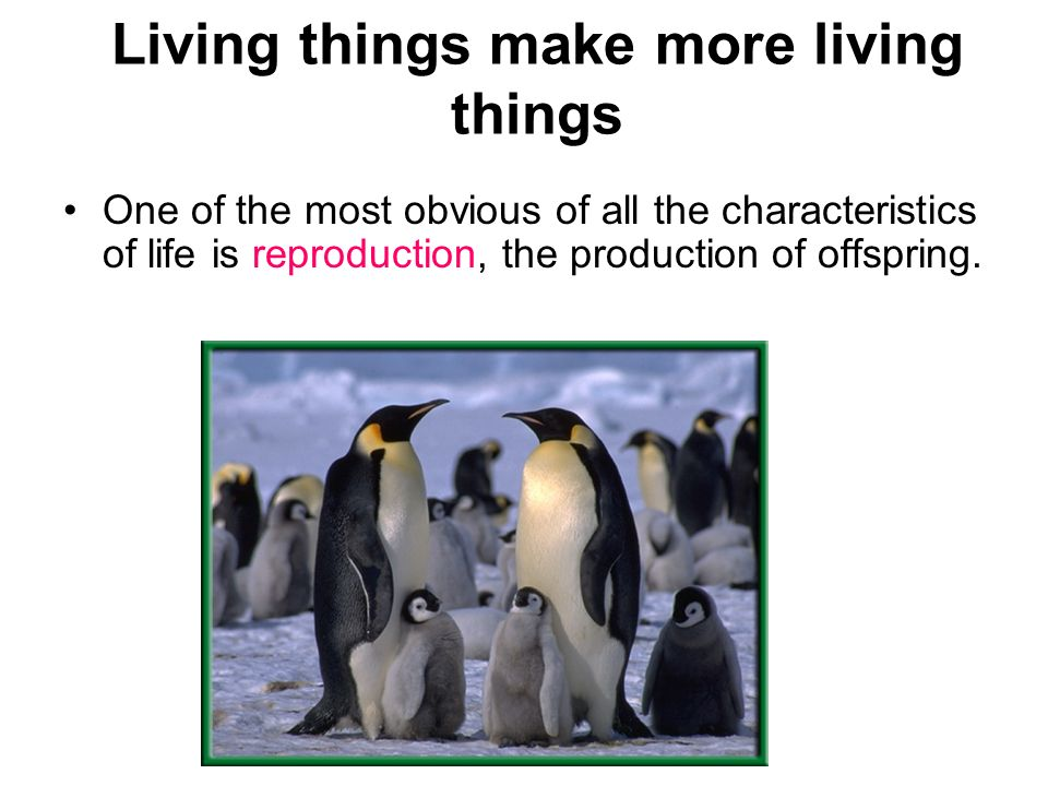 Living things make more living things