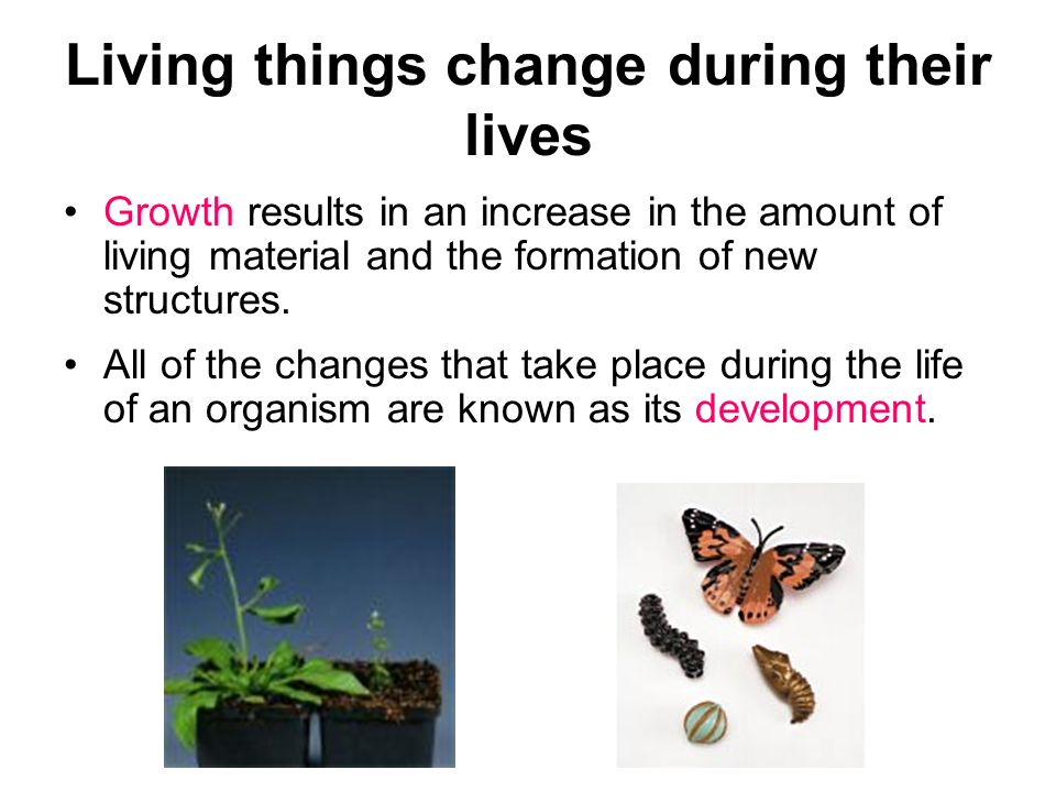Living things change during their lives