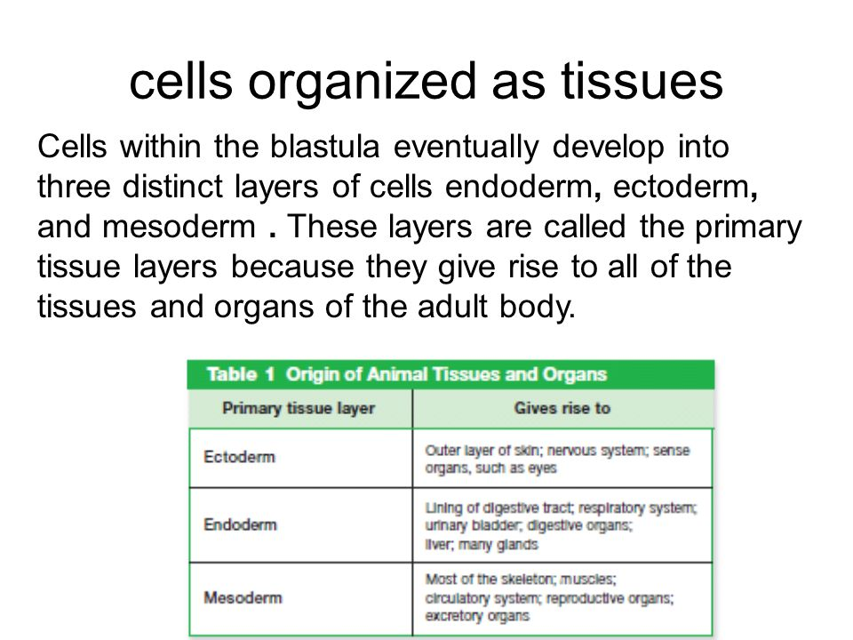 cells organized as tissues
