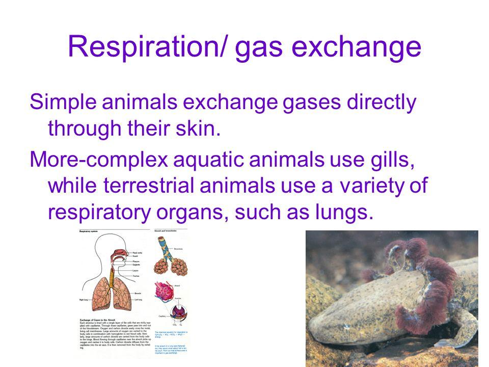 Respiration/ gas exchange