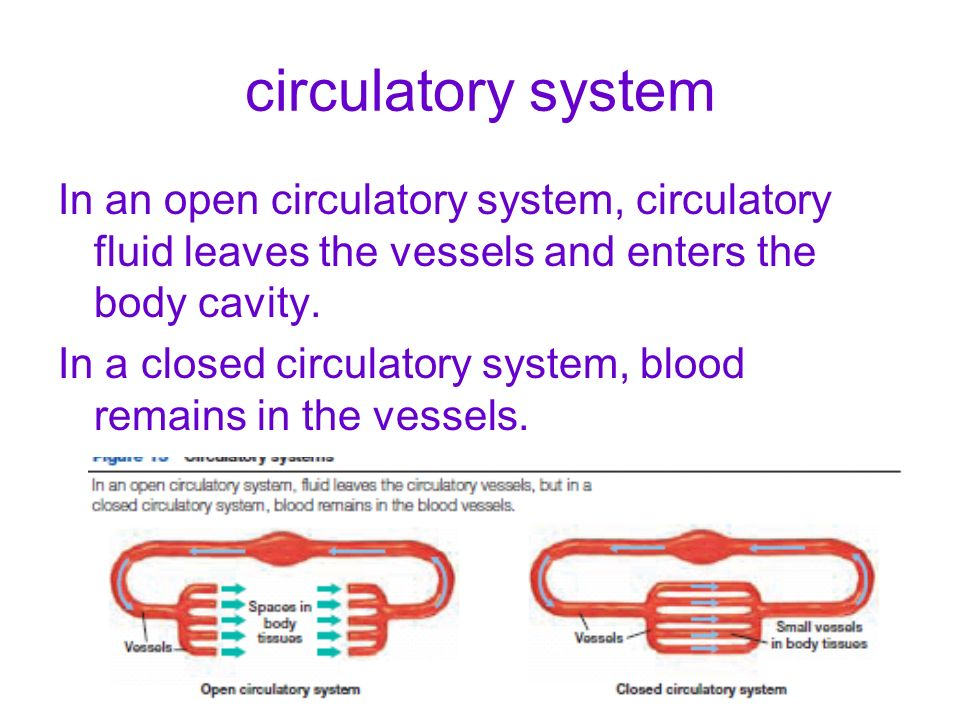 circulatory system In an open circulatory system, circulatory fluid leaves the vessels and enters the body cavity.