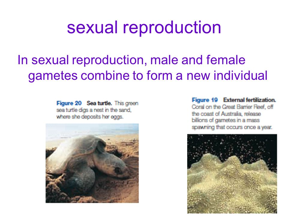 sexual reproduction In sexual reproduction, male and female gametes combine to form a new individual.