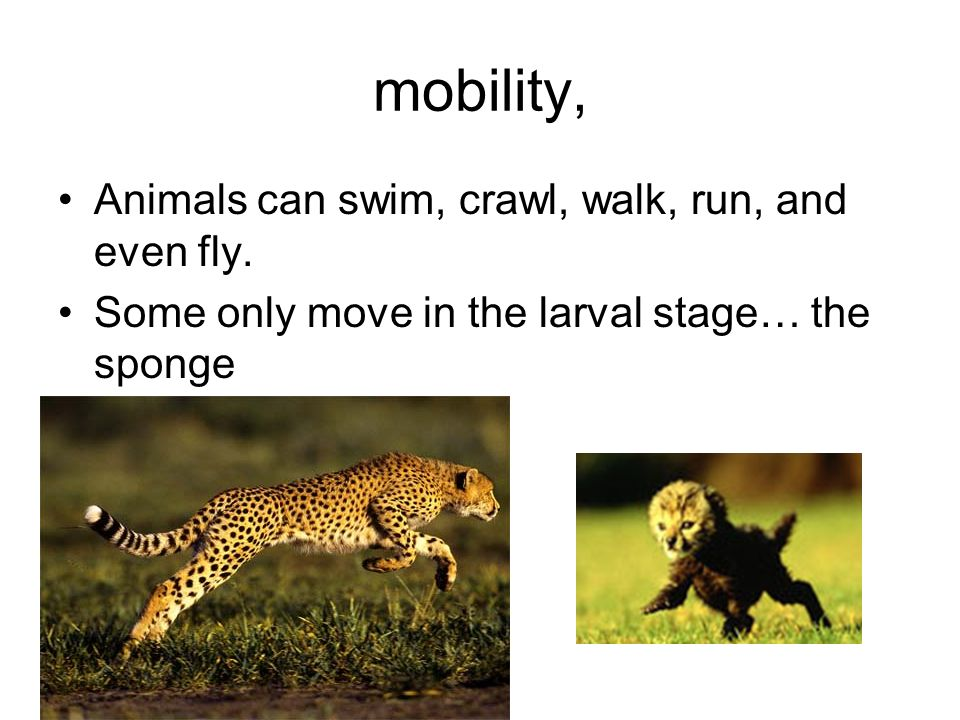 mobility, Animals can swim, crawl, walk, run, and even fly.
