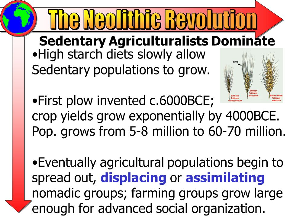 Sedentary Agriculturalists Dominate