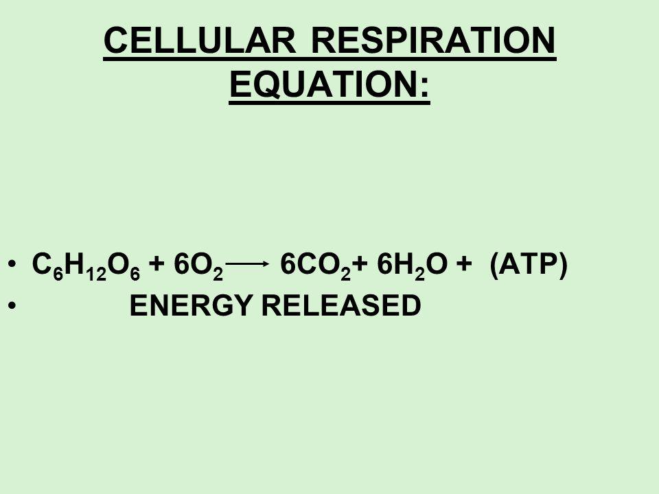 CELLULAR RESPIRATION EQUATION: