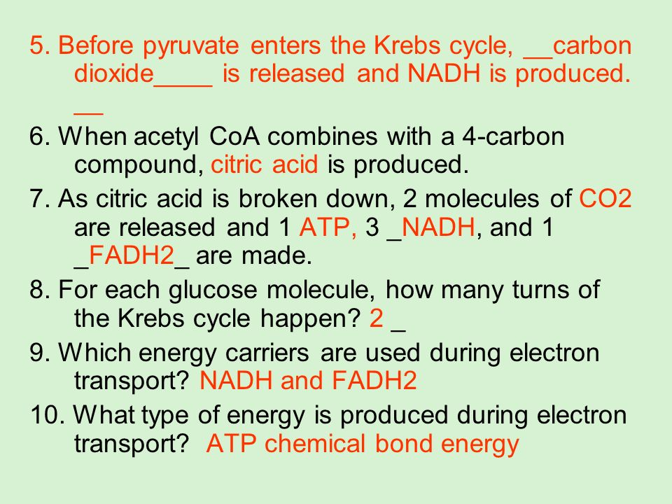 5. Before pyruvate enters the Krebs cycle, __carbon dioxide____ is released and NADH is produced. __