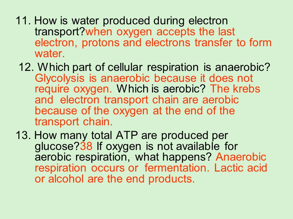 11. How is water produced during electron transport