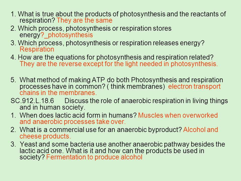 1. What is true about the products of photosynthesis and the reactants of respiration They are the same