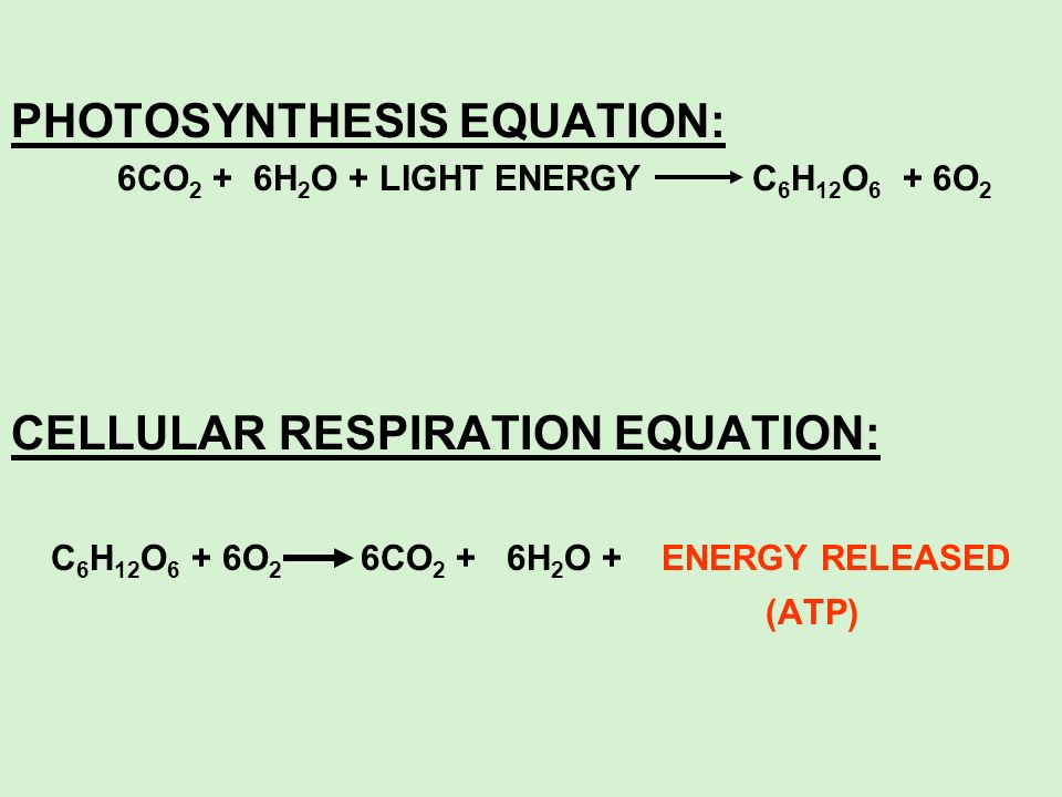 PHOTOSYNTHESIS EQUATION: