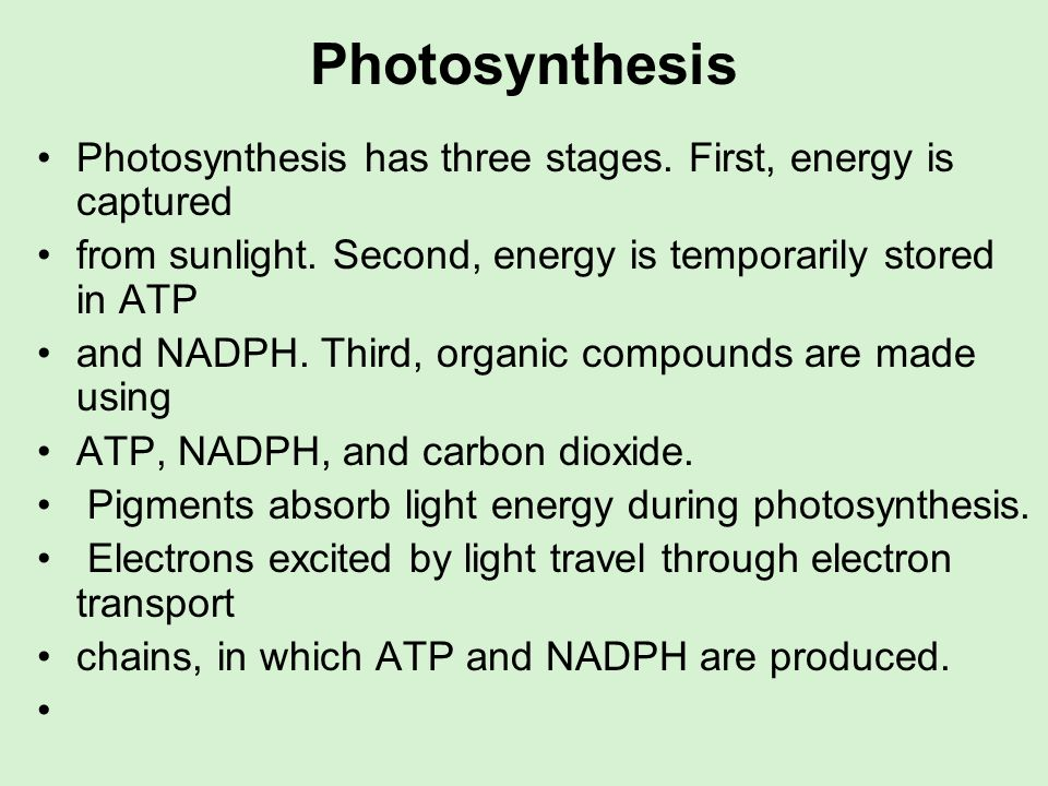 PhotosynthesisPhotosynthesis has three stages. First, energy is captured. from sunlight. Second, energy is temporarily stored in ATP.