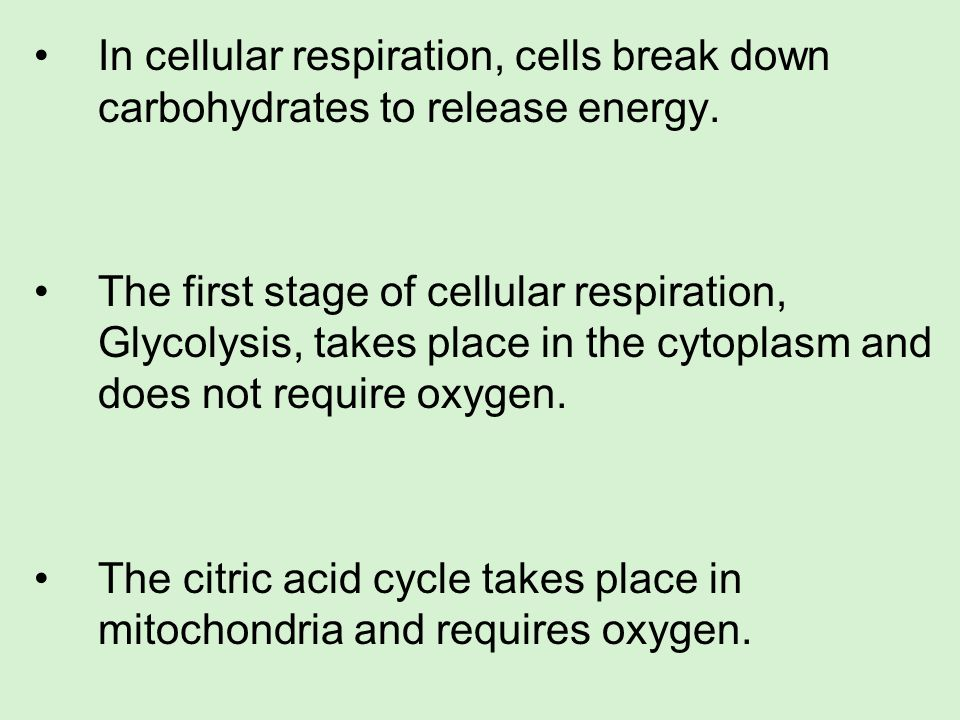 In cellular respiration, cells break down carbohydrates to release energy.