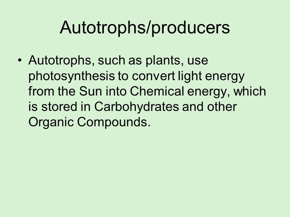 Autotrophs/producers