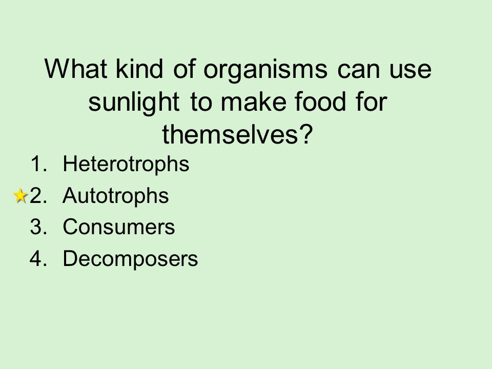 What kind of organisms can use sunlight to make food for themselves