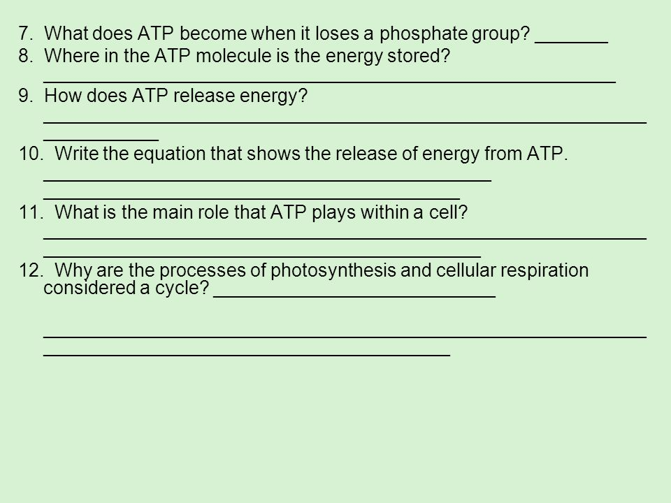 7. What does ATP become when it loses a phosphate group _______