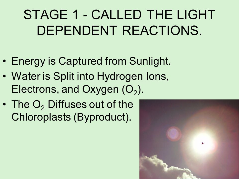 STAGE 1 - CALLED THE LIGHT DEPENDENT REACTIONS.