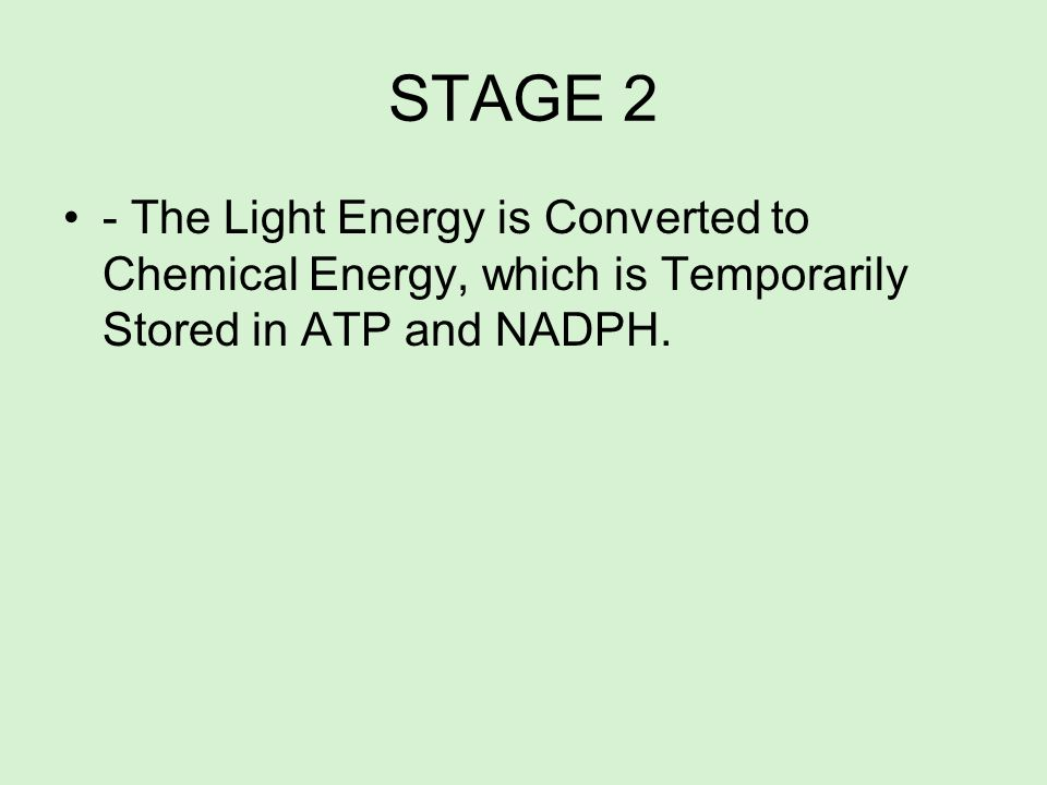 STAGE 2- The Light Energy is Converted to Chemical Energy, which is Temporarily Stored in ATP and NADPH.