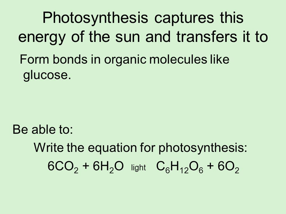 Photosynthesis captures this energy of the sun and transfers it to