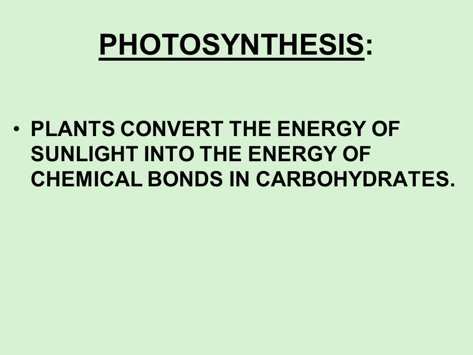 PHOTOSYNTHESIS: PLANTS CONVERT THE ENERGY OF SUNLIGHT INTO THE ENERGY OF CHEMICAL BONDS IN CARBOHYDRATES.