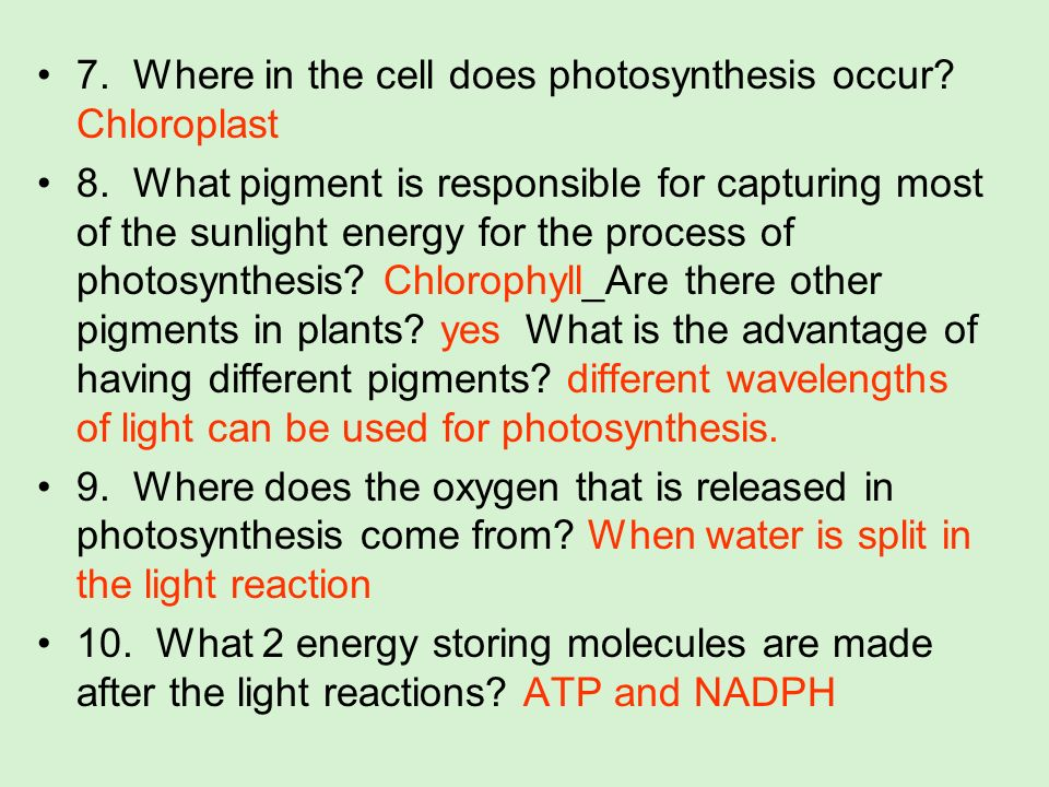 7. Where in the cell does photosynthesis occur Chloroplast
