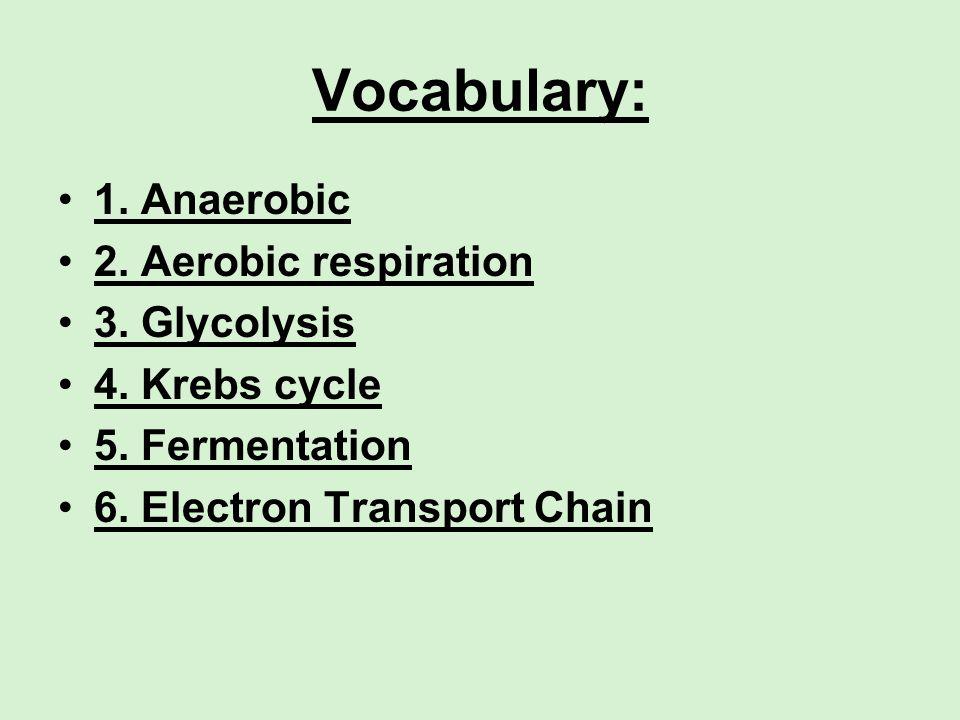 Vocabulary: 1. Anaerobic 2. Aerobic respiration 3. Glycolysis