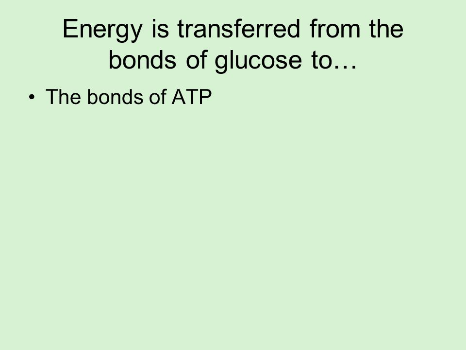 Energy is transferred from the bonds of glucose to…