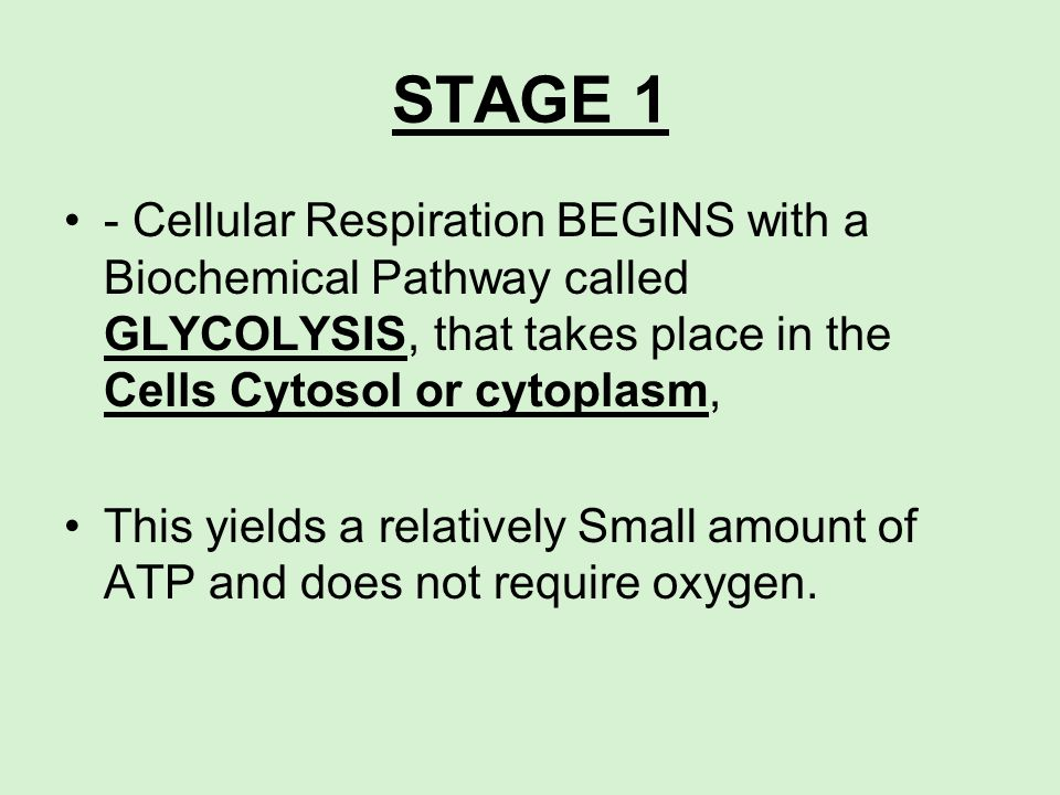 STAGE 1- Cellular Respiration BEGINS with a Biochemical Pathway called GLYCOLYSIS, that takes place in the Cells Cytosol or cytoplasm,