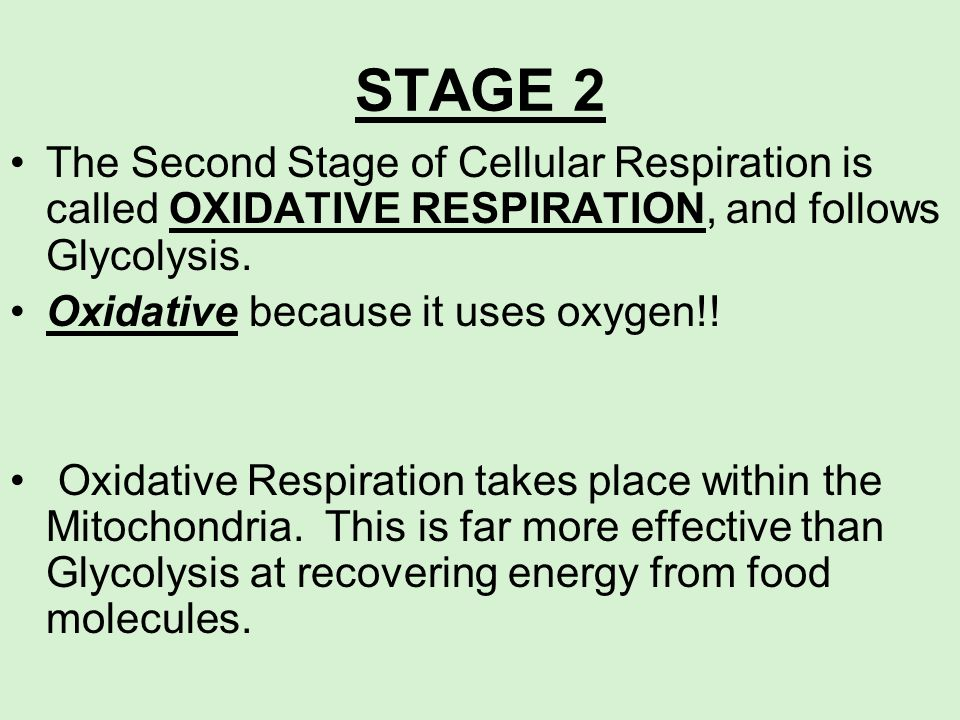 STAGE 2The Second Stage of Cellular Respiration is called OXIDATIVE RESPIRATION, and follows Glycolysis.