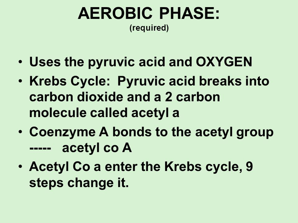 AEROBIC PHASE: (required)