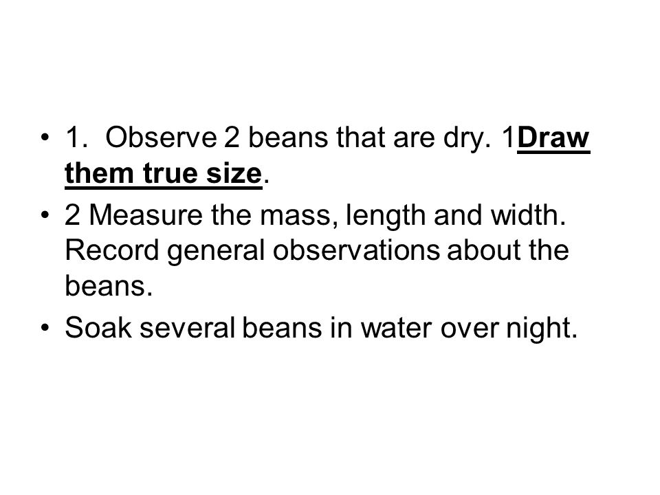 1. Observe 2 beans that are dry. 1Draw them true size.