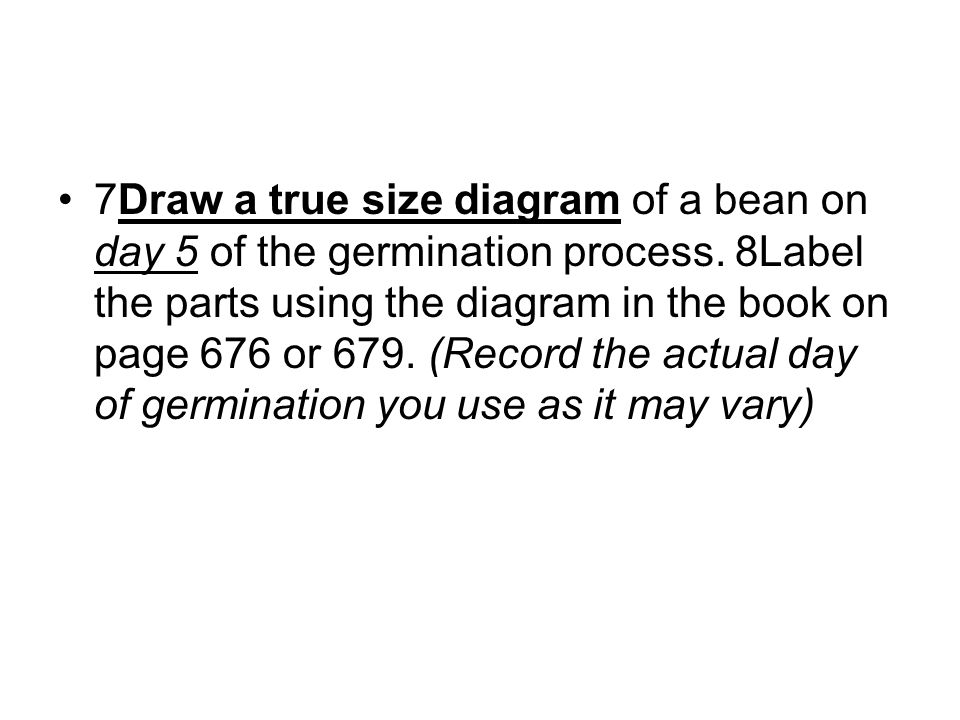 7Draw a true size diagram of a bean on day 5 of the germination process.