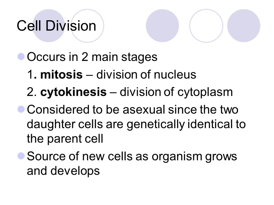 Cell Division Occurs in 2 main stages 1. mitosis – division of nucleus