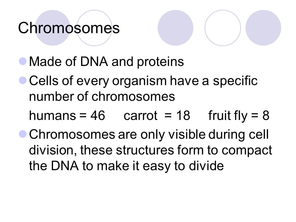 Chromosomes Made of DNA and proteins