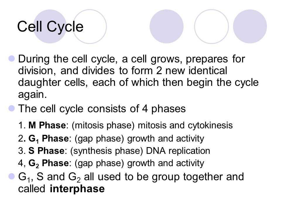 Cell Cycle 1. M Phase: (mitosis phase) mitosis and cytokinesis